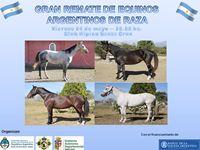 Asista al gran remate de equinos argentinos de raza