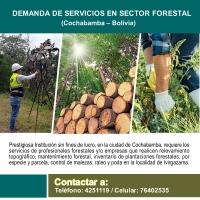 DEMANDA DE SERVICIOS EN SECTOR FORESTAL